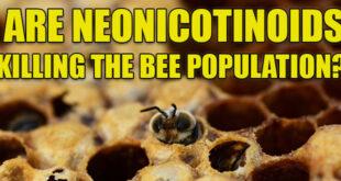 bees ead