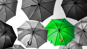 image of black umbrellas with one green umbrella