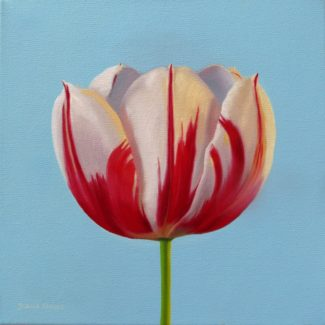 Oil painting by Toronto artist Joanna Strong of a red and white striped tulip