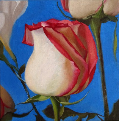 Oil painting on canvas by Canadian artist Joanna Strong of a pink and white rose, entitled: Threefold Rose.