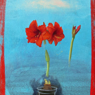 Oil and acrylic painting by Joanna Strong of the growth of an amaryllis from bulb to blossom.