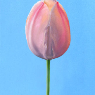 Oil painting by Canadian artist Joanna Strong of a pink tulip.
