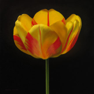 Oil painting by Canadian artist Joanna Strong of a yellow and red tulip.