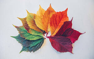 Changing leaves to represent life transition therapy and counseling