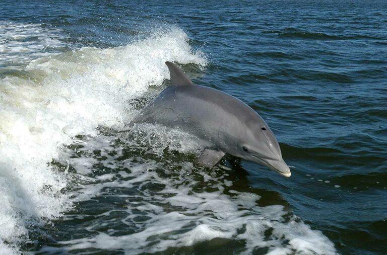 Dolphin Watching Puerto Banus, Marbella