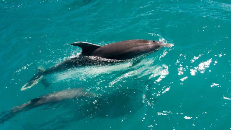 Dolphin Watching Marbella