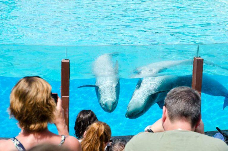 Selwo Marina Delfinarium - Dolphin Watching