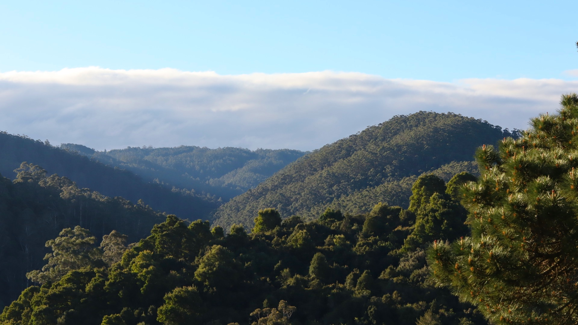 View From the Studio over the Hills