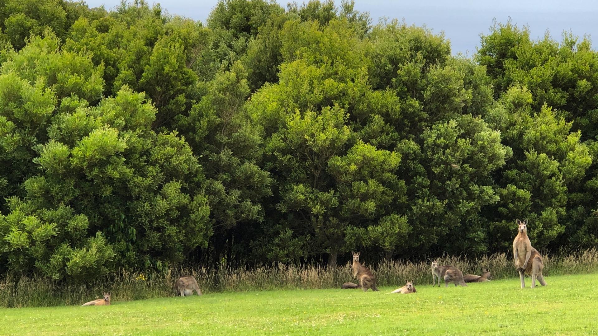Studio Garden View of Kangaroos