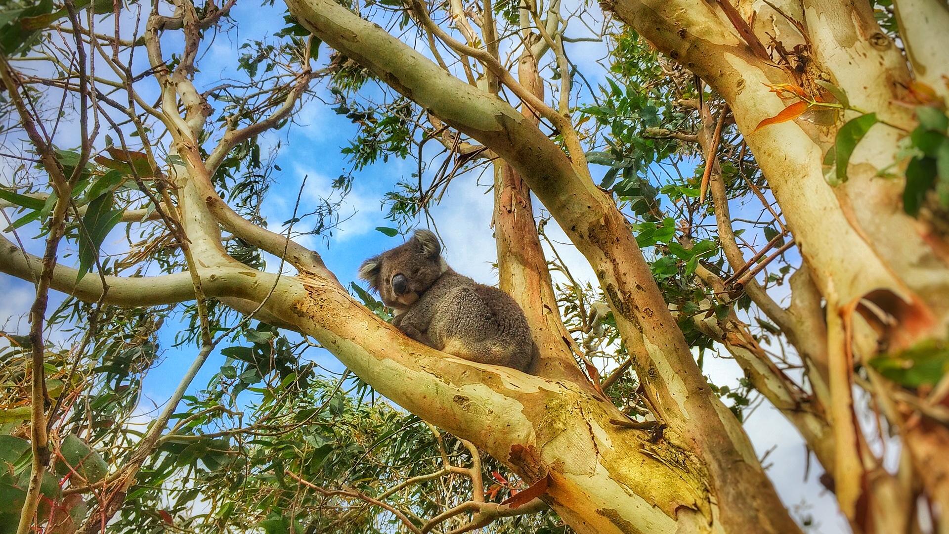 Studio Garden View of Koala