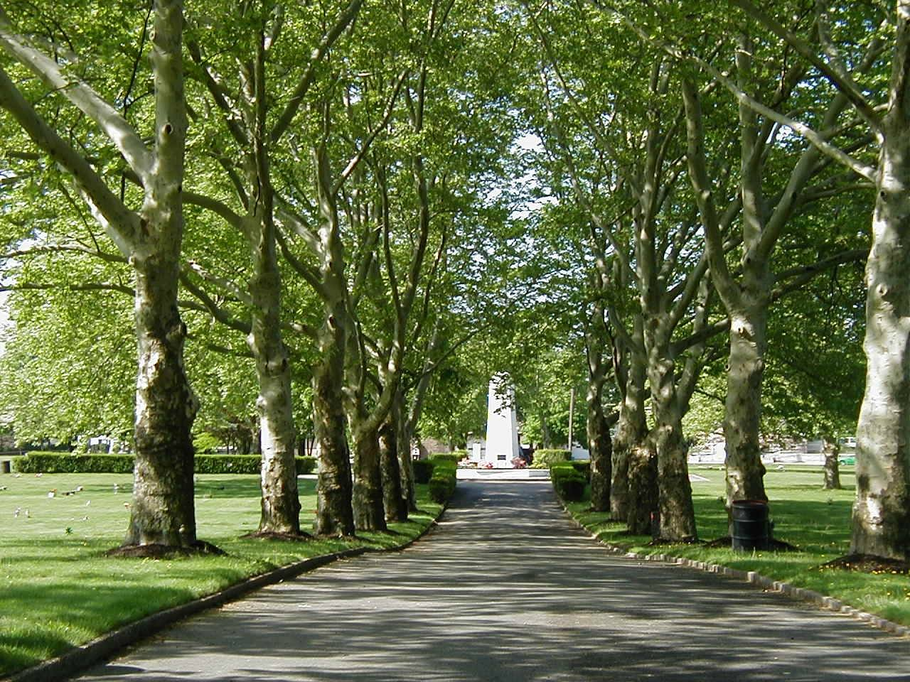 Rows of trees lining a road leading to a memorial at colonial memorial park