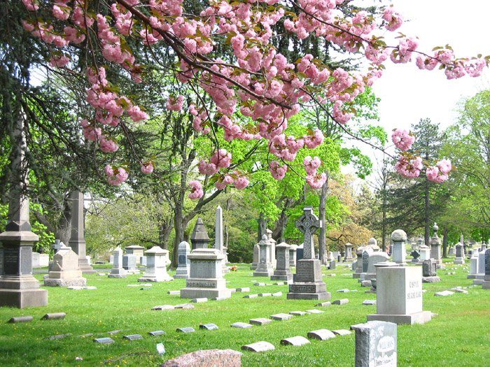 Harleigh Cemetery with pink flowers in the foreground managed by louis cicalese