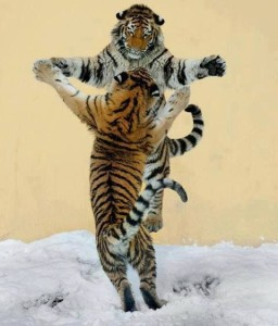 Access your inner courage, integrity, happiness - Tiger frolic with healing sound