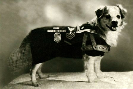 USS Iowa dog