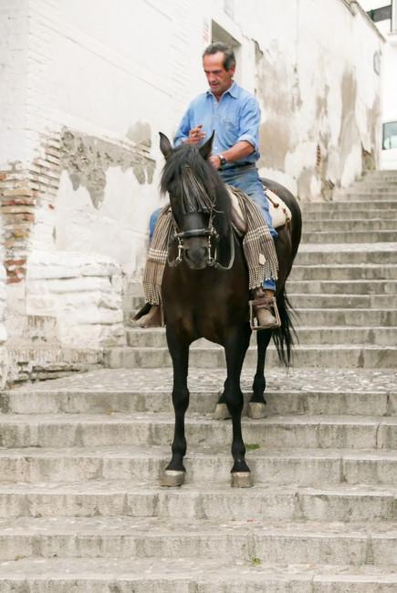 St Nick Horse