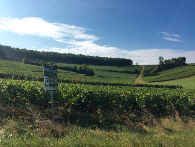 chablis-vineyards-1