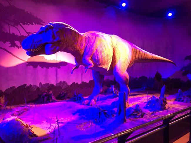 London Museum of Natural History Dinosaurs