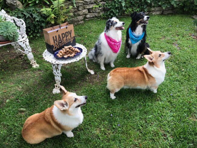 Birthday Dog Party