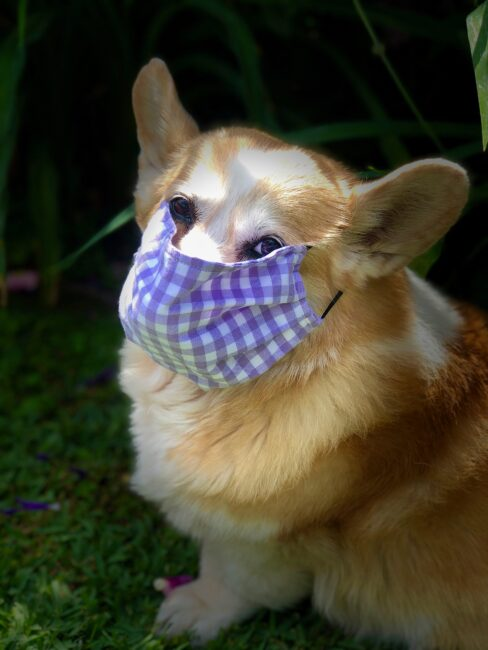 Remi with a face mask