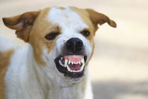 Arizona Dog Bite Claims: What You Need to Know