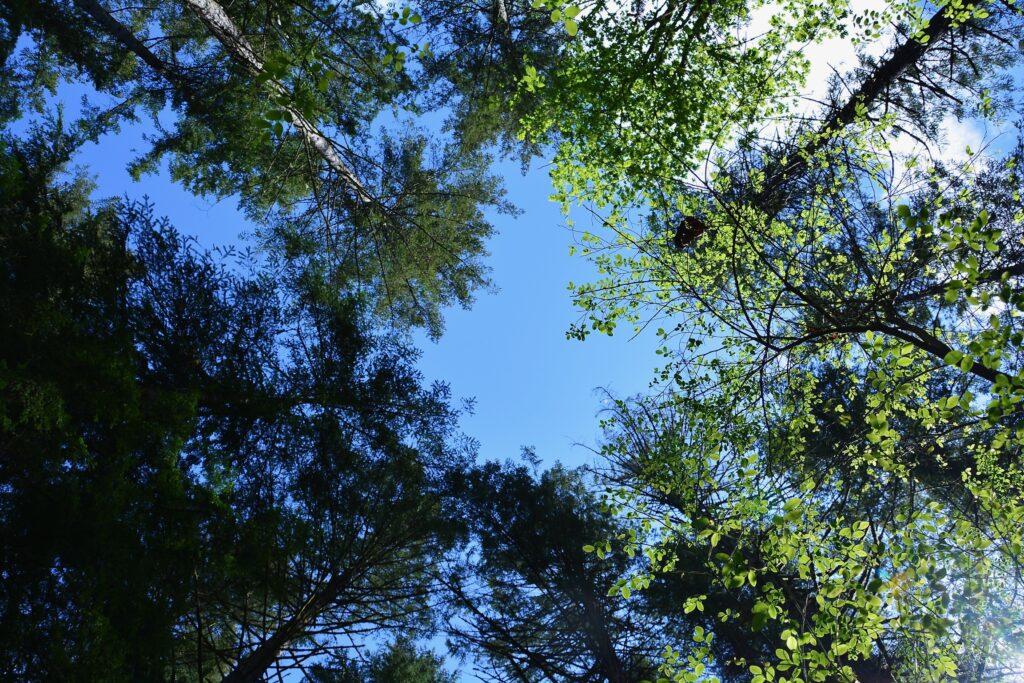 Seal Bay Park, look up, look way up.