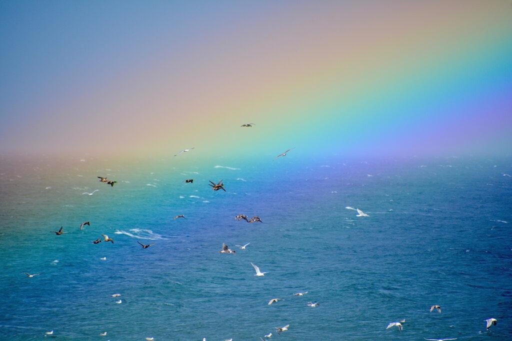 Seagulls in the rainbow