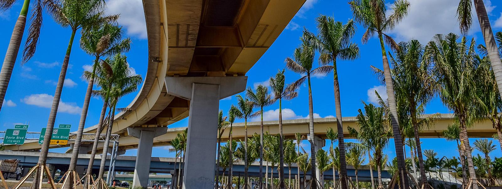 bridge-and-palm-trees