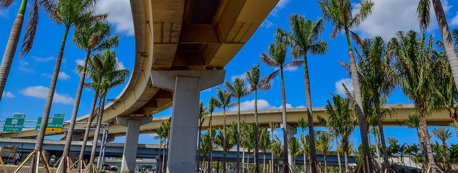 bridge-and-palm-trees