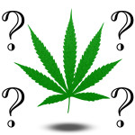 Marijuana Questions