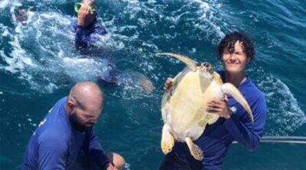Grupo di 4 persona ta salba un turtuga pega den liña di pisca