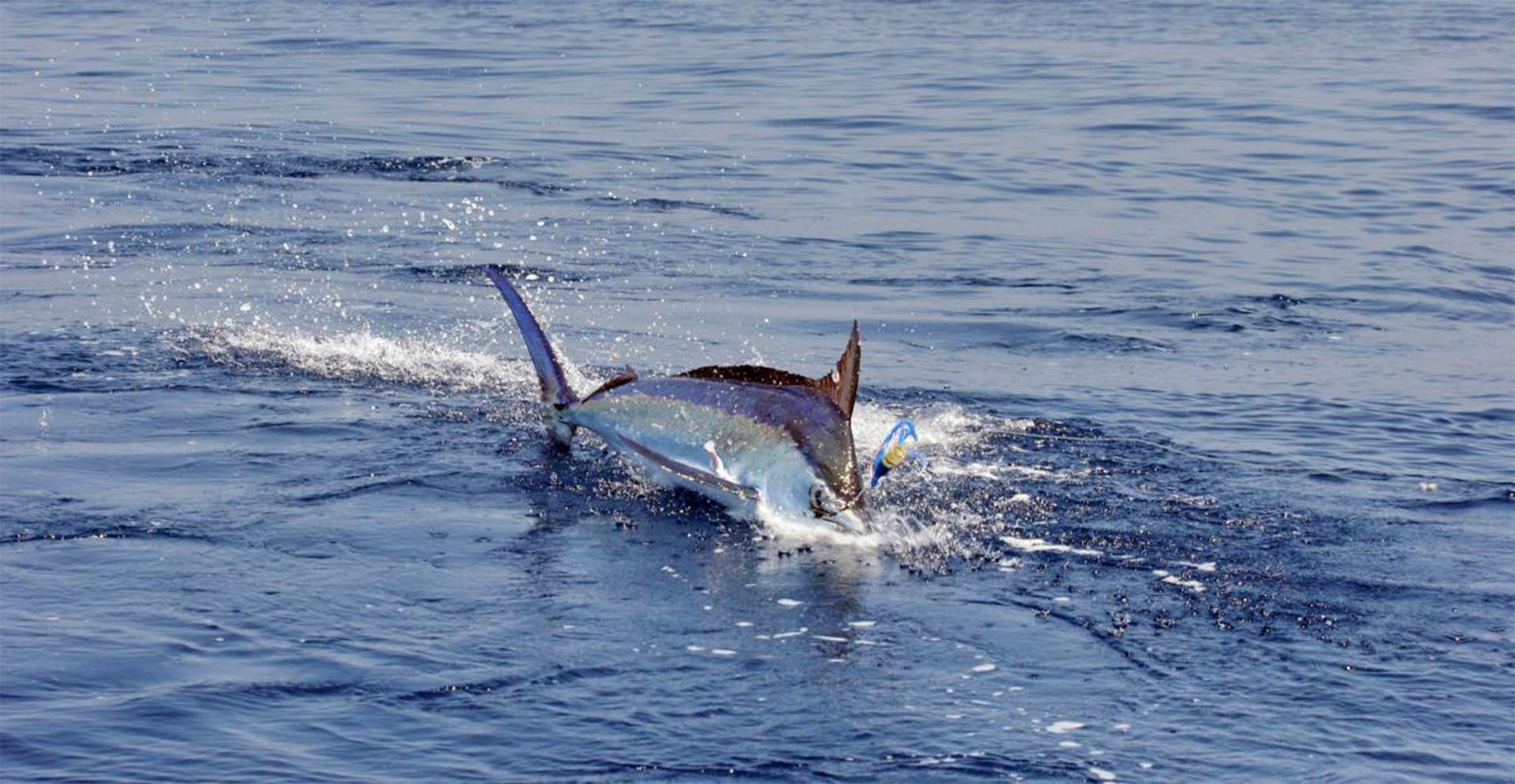 Panamanian fishing vacation