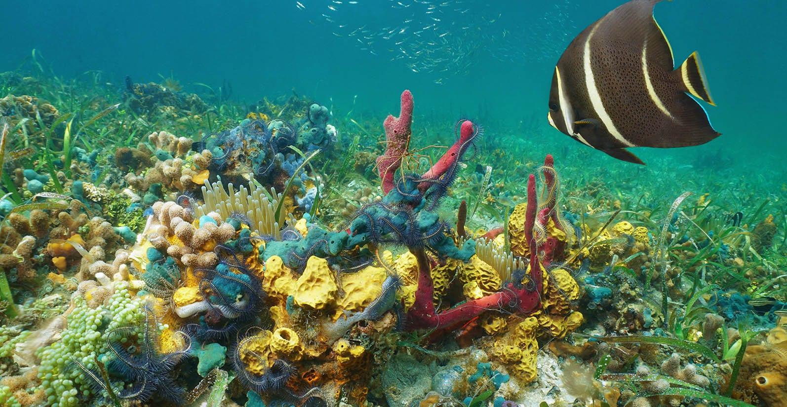 exotic panama diving