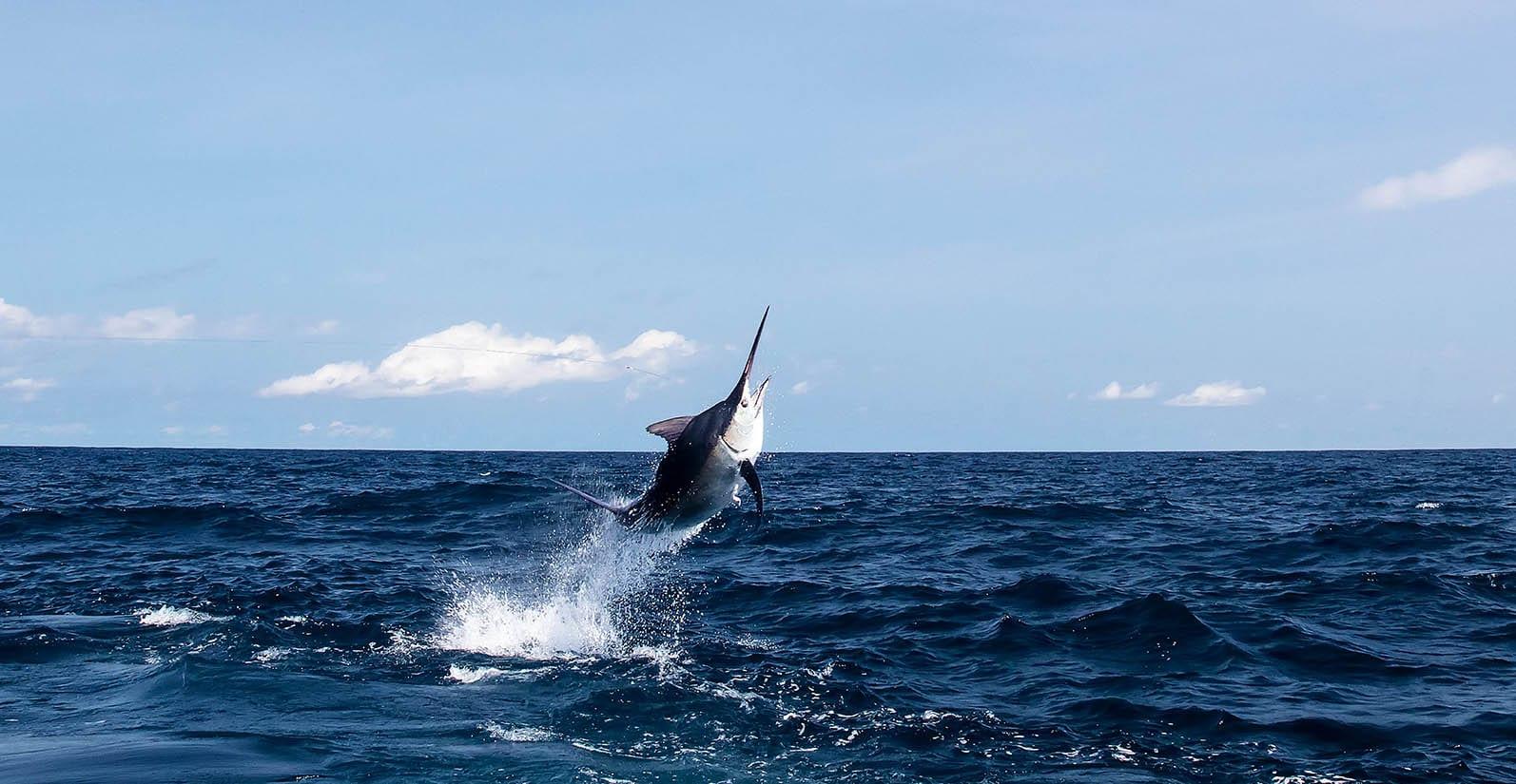 Cala Mia sportfishing in Panama
