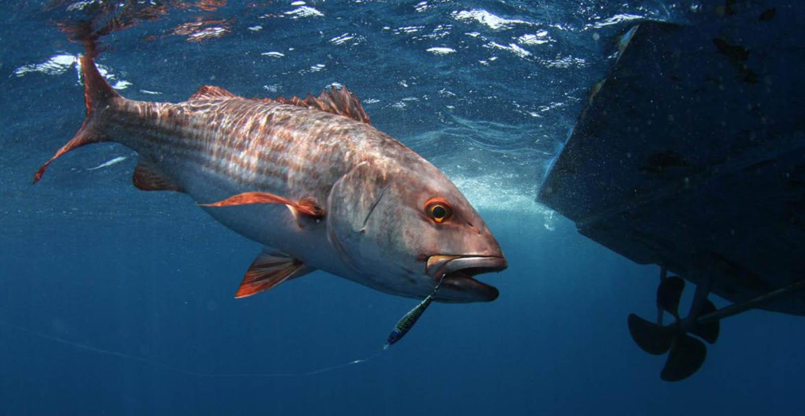 Panama sport fishing