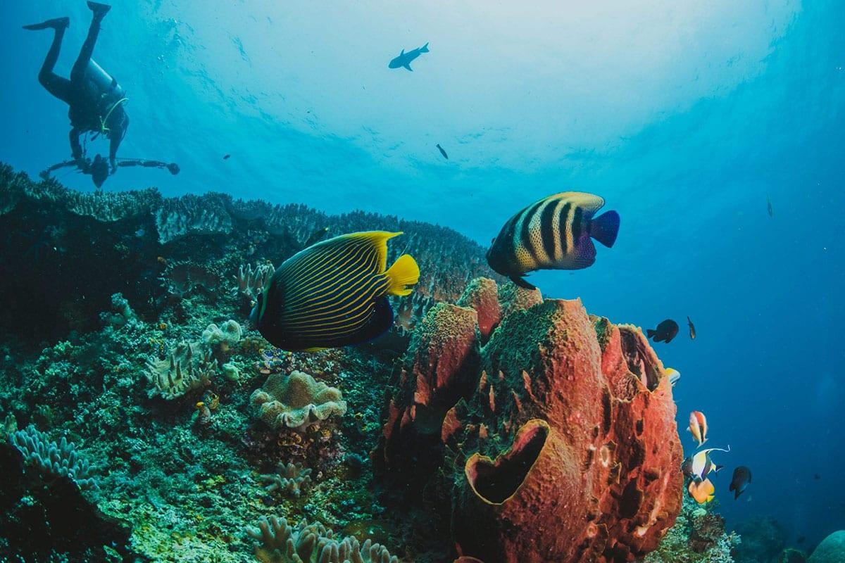 Scuba Dive Panama