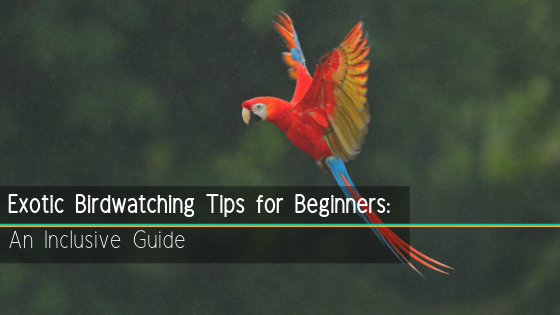 featured image exotic bird watching for beginners