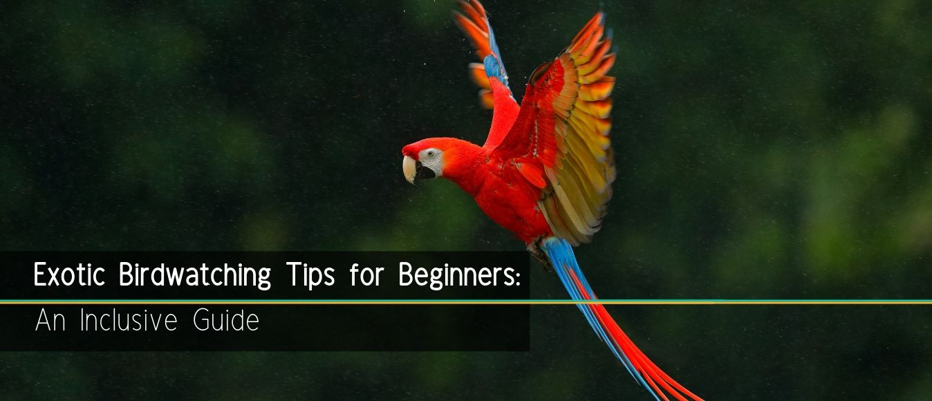 Exotic Birdwatching Tips for Beginners