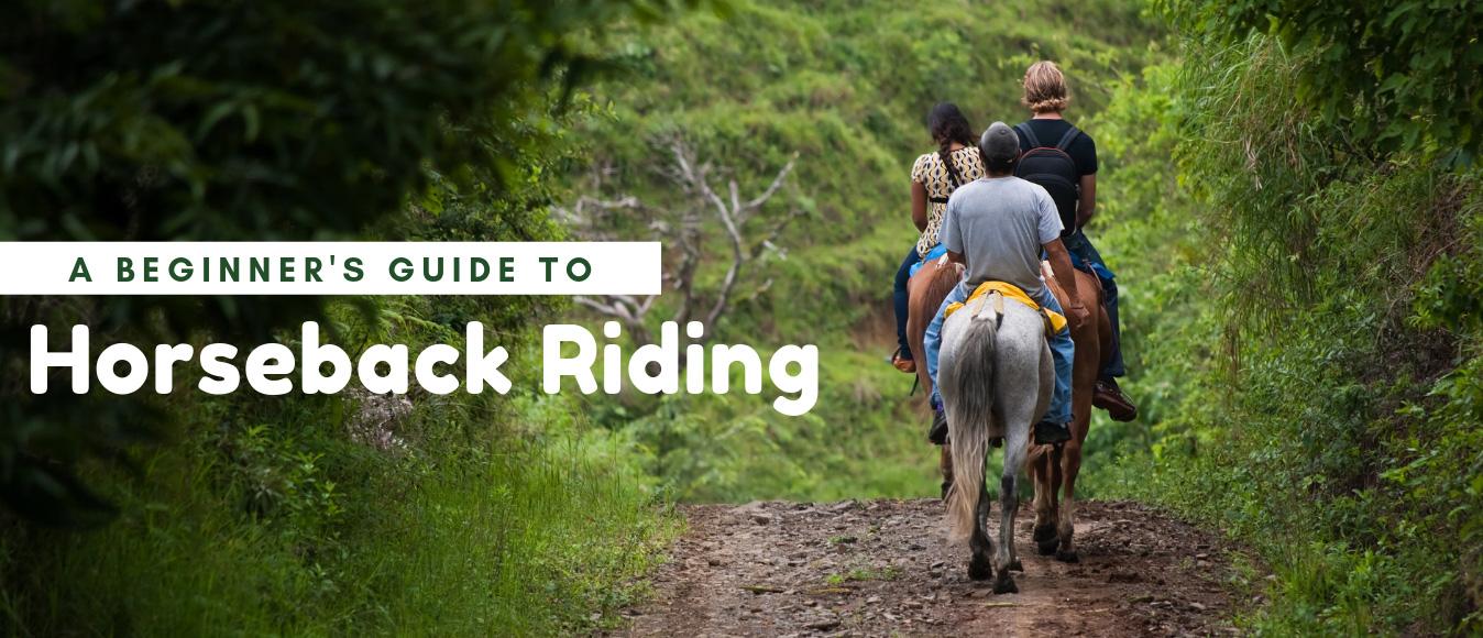 A Beginner's Guide to Horseback Riding
