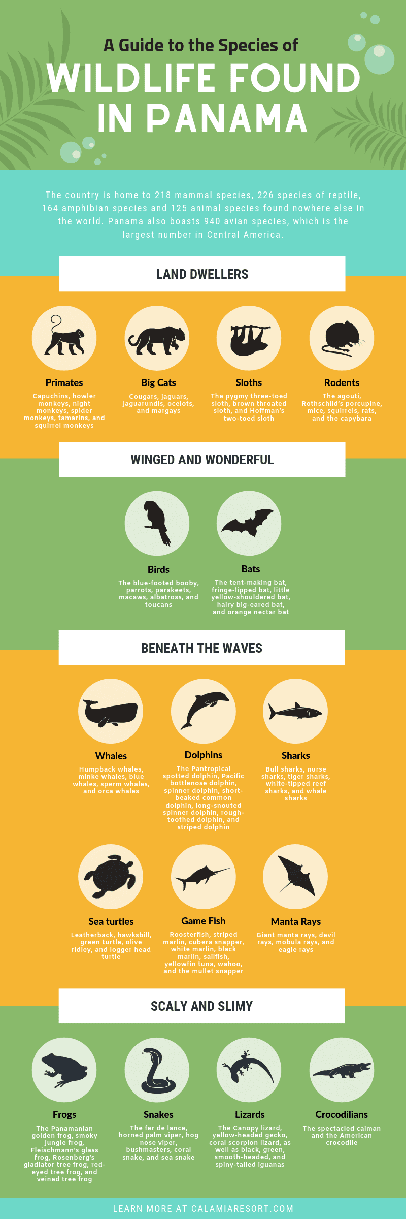 A Guide to the Species of Wildlife Found in Panama infographic
