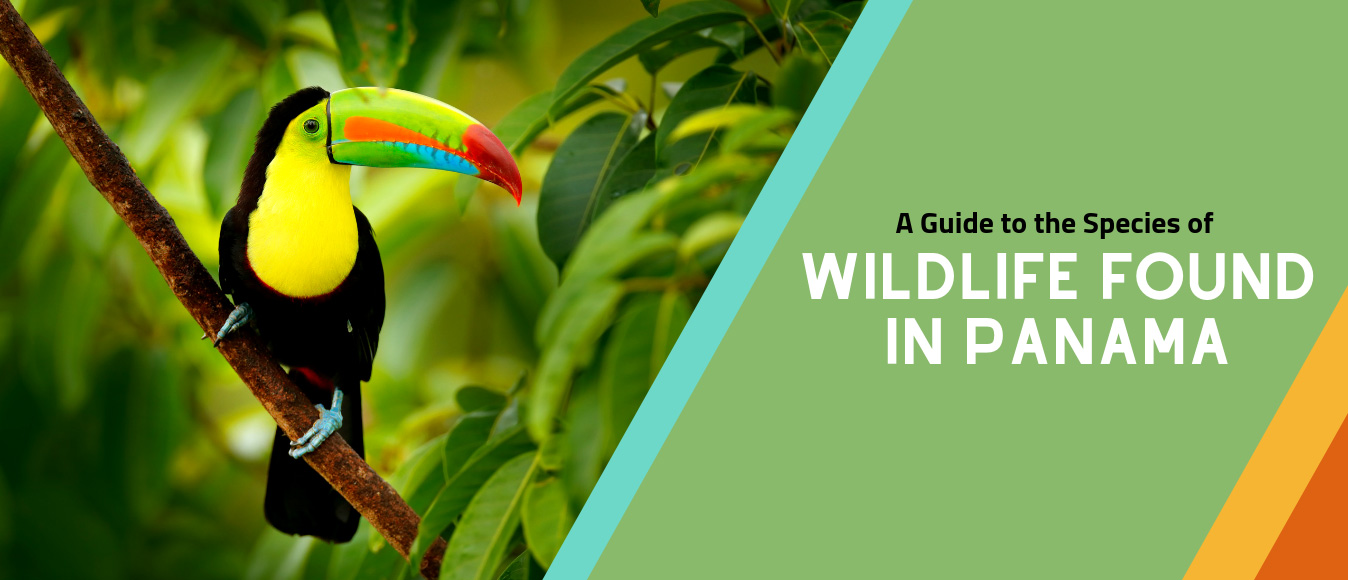 A Guide to the Species of Wildlife Found in Panama