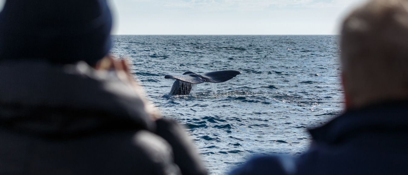 Essential Whale Watching Photography Tips