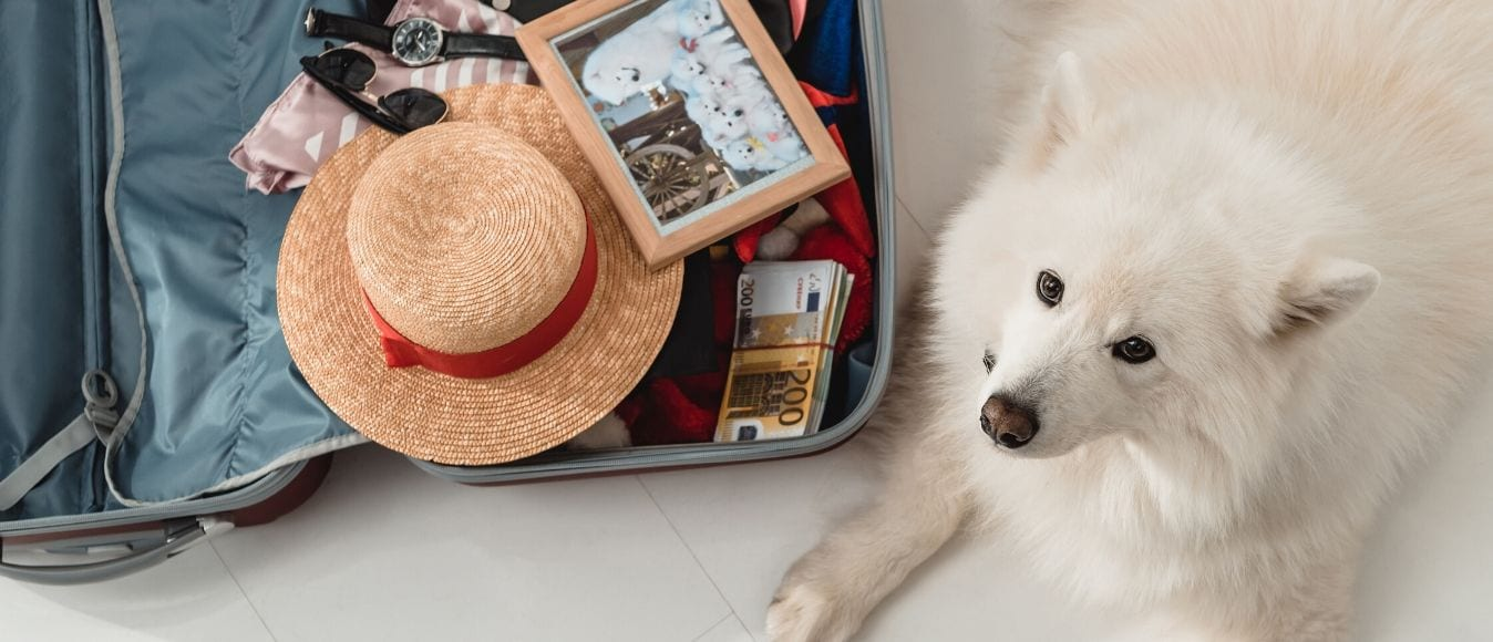 How to Travel to Panama with Your Dog