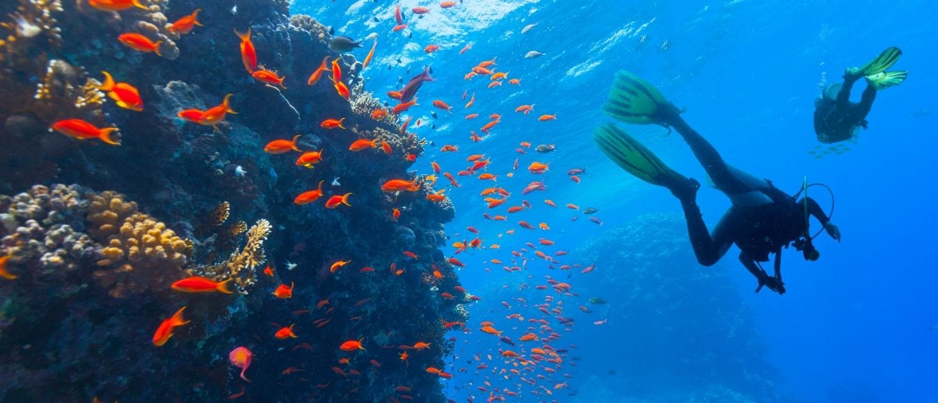 Types of Scuba Diving Certifications