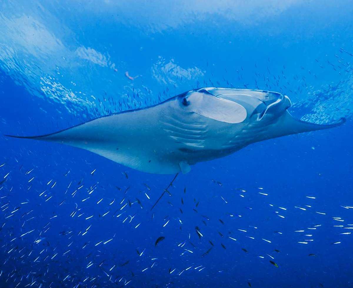Top Panama Dive Sites