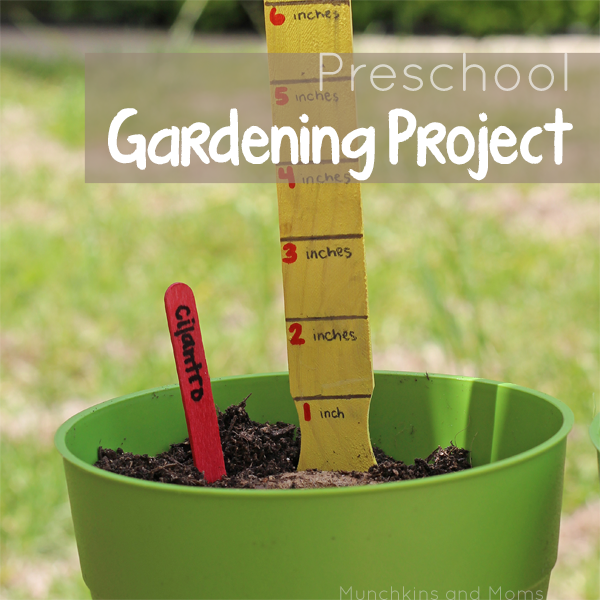 Simple ideas on how to start a garden with preschoolers!
