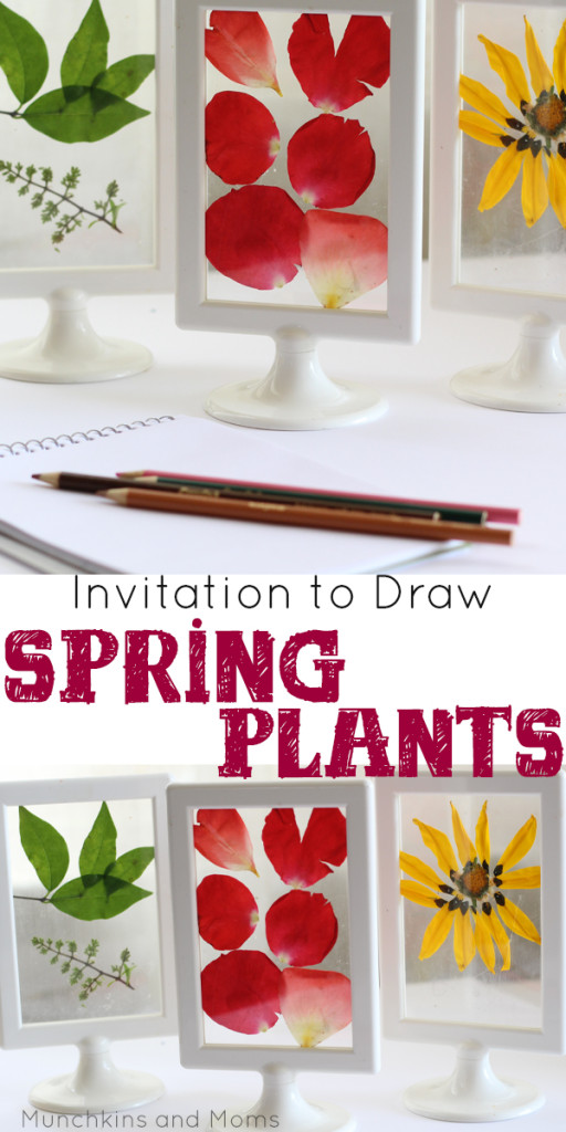 What a stunning preschool art and science investigation! Perfect for a Spring Flowers theme.