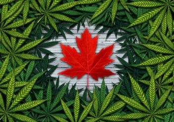 Marijuana 4 Dummies: 10 Days Until Canada's Recreational Marijuana Market Opens – Legal Weed Countrywide! (10-8-18)