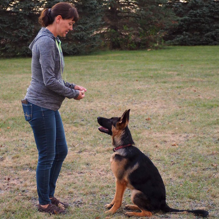 Trained German Shepherd for sale MI von Buchmann