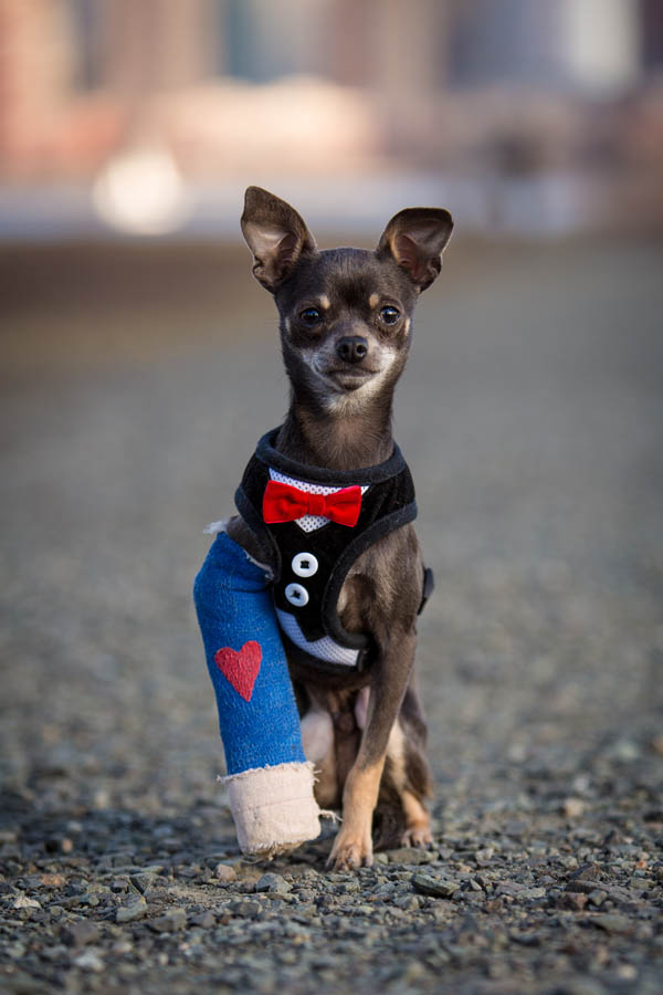 Rescue Dog Photography NYC