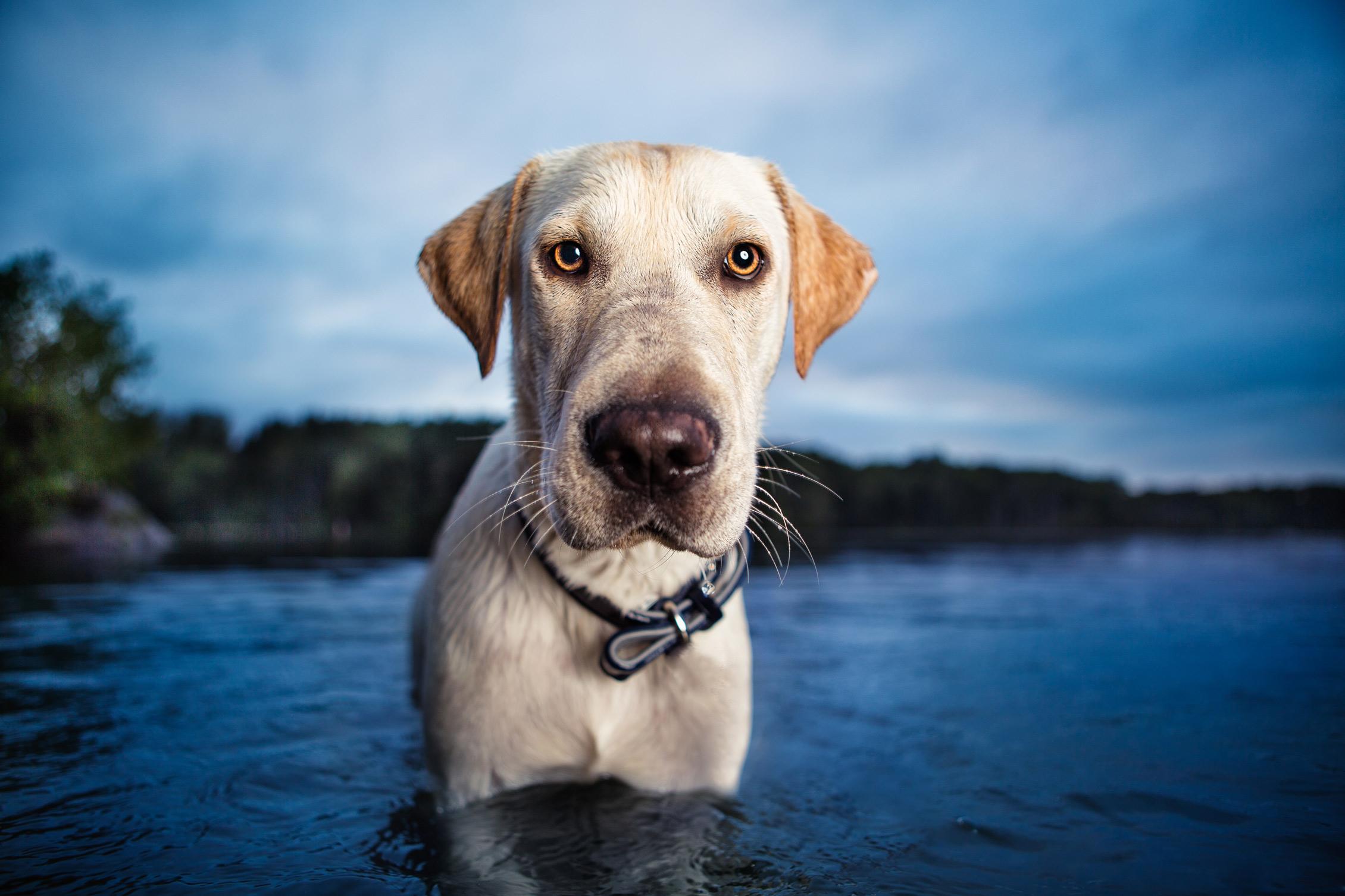 NYC dog photography by Leslie Leda